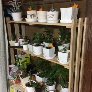 植物棚完成
